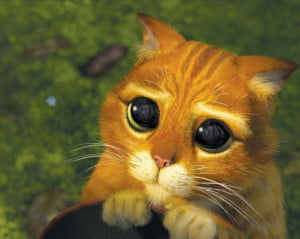 shrek_kitty_eyes_clean